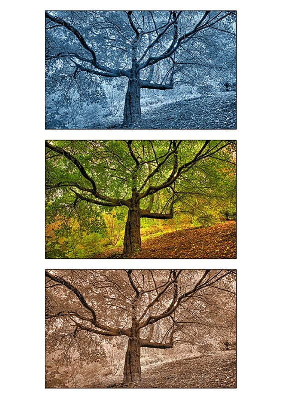 Three TreesTriptych 1 - TREES, FLOWERS AND PLANT PHOTOS