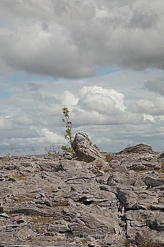 Limestone landscape, Burren National Park - Ireland