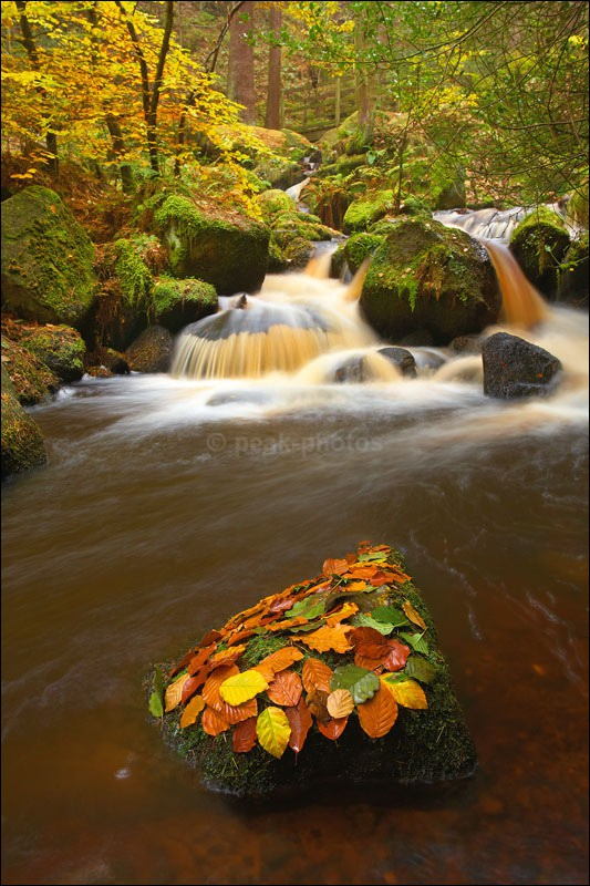 Wyming Brook Autumn - Photographs of Woodland & Rivers