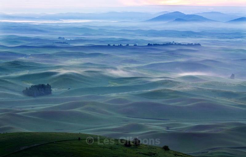 misty morning - Palouse