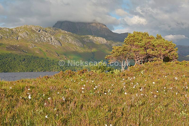 Cotton Grass and Siloch Moutain - Loch Maree - Scottish Highlands - Scotland