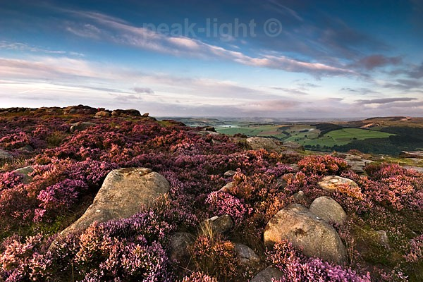 Heather - Peak District