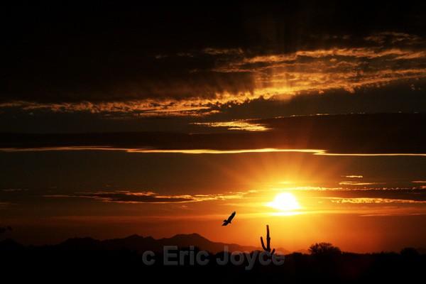 Vulture at Sunset - Tuscon, Arizona