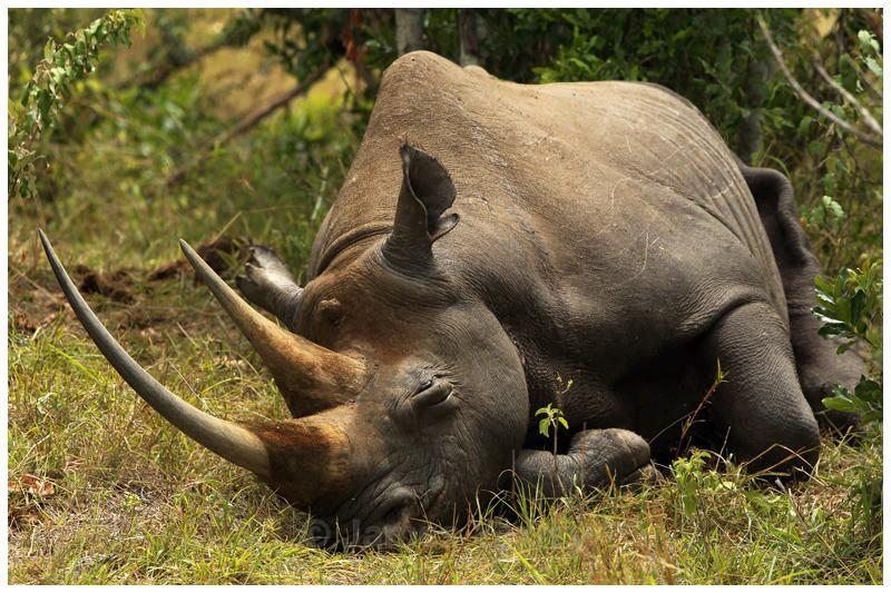 Emung - of the bush - The Big Five