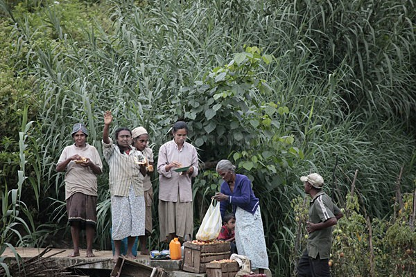 Tea plantation workers, Ella Sri Lanka 67 - Sri Lanka wildlife, people & places
