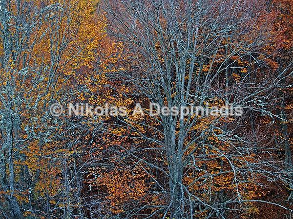 Φθινοπωρινά Χρώματα Ι Autumn colors - Βόρεια Ελλάδα Ι North Greece