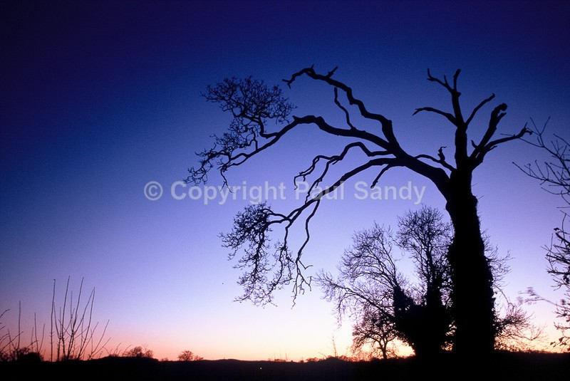 Near the Exe at dusk - Seeing the Wood AND the Trees