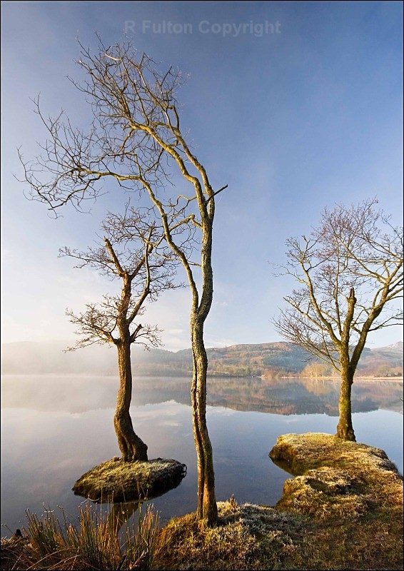 Three Trees - Landscapes