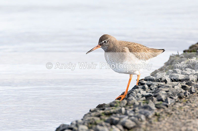 180307-Wirral0221 - Latest Photographs