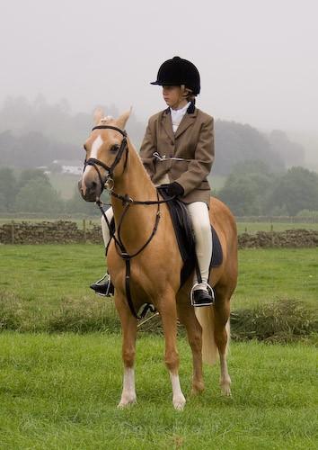11 - Moniaive Horse Show 2008
