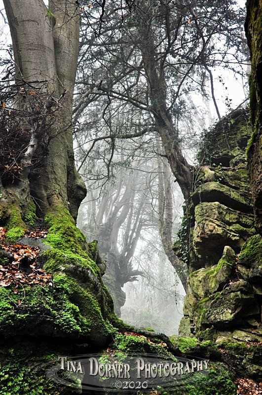 View of ancient trees through moss & rock. Forest of Dean and Wye Valley Portfolio by Tina Dorner Photography