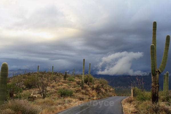 White cloud - Tuscon, Arizona