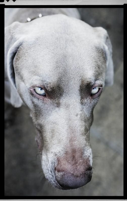 Portrait of a Dog - Portraits