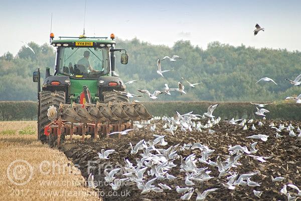 - Farming/Agriculture