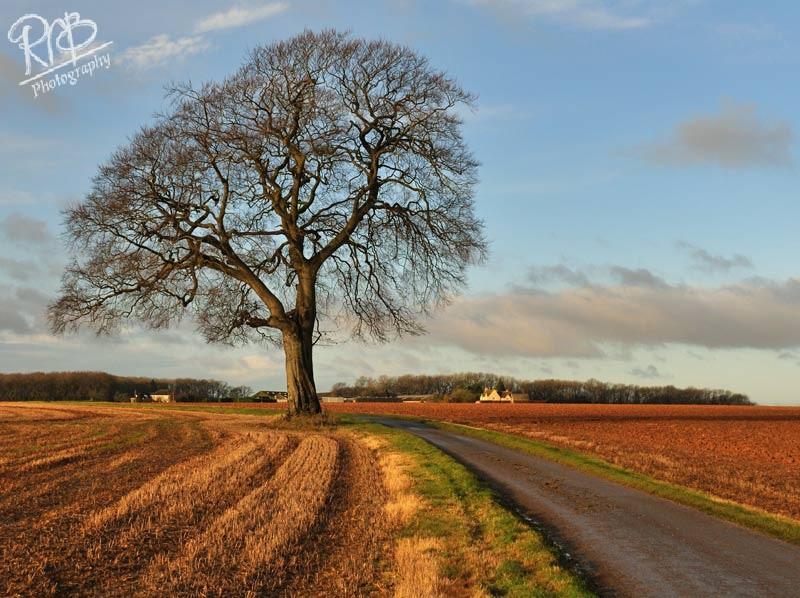 Autumn Farm Track - Other UK Landscapes