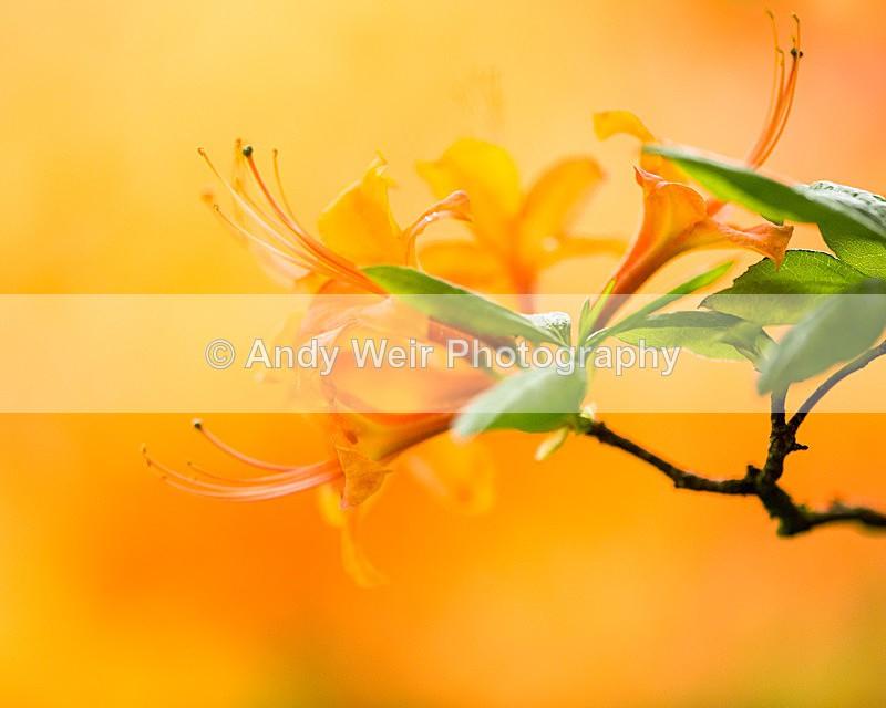 20140525-3K8A1635 - Plants & Flowers