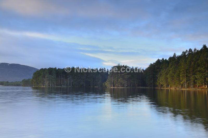 Pine Forests of Loch Garten   Cairngorms Photo Gallery   Scotland