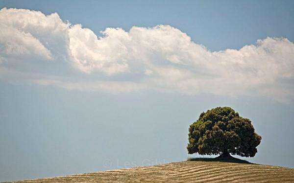 cloud over tree - Tuscany
