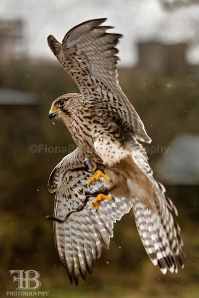 wow march-30 - Birds of Prey