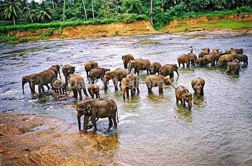 Elephant wash - Travel & Landscape