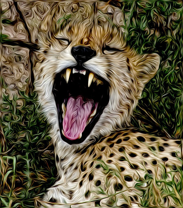 Cheeta yawning - CrazyCat Imagery