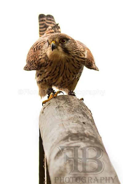 Wow April 5-9 - Birds of Prey