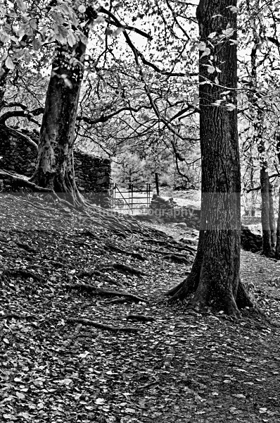 Wooded Walk - Monochrome Photograph's