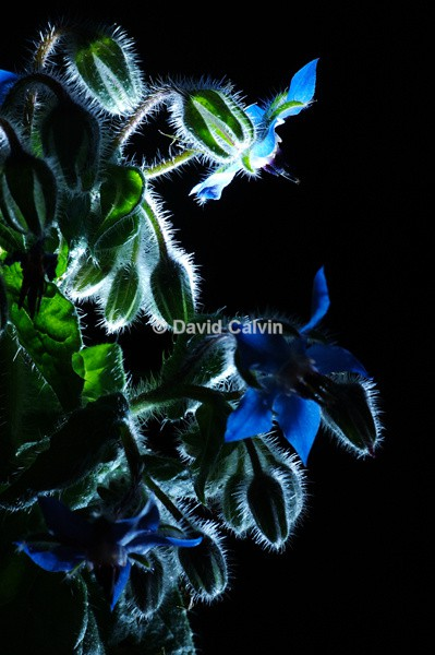 Illuminated Plantlife - Nocturnal