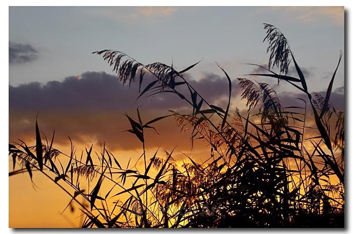 In The Reeds - Scapes
