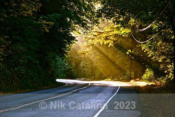 Sunlit Highway - Landscapes
