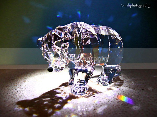 Crystal Bear. - Low Light Photography