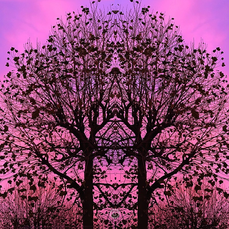 Magical Silhouettes - FLOWERS