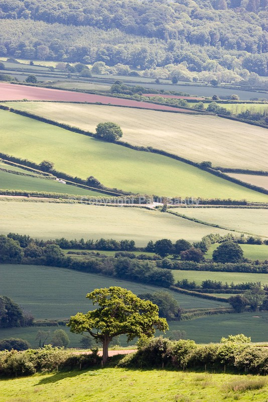 Across the Exe Valley from near Upcott Wood - Featured Images