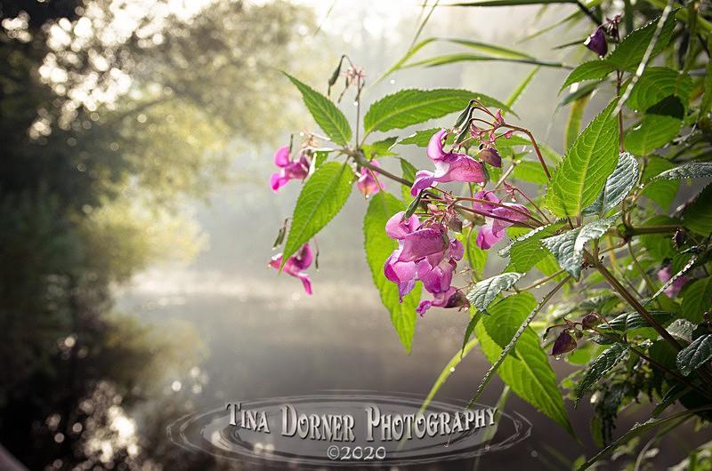 - Plants & Flowers
