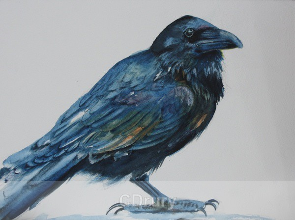 The Raven Vision SOLD - Archived
