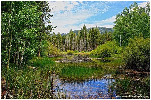 Lake Tahoe Pond - Nevada (mostly) Landscapes