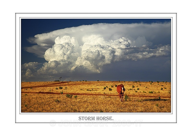 Beautiful Wall Art print  with a Border, showing a Chestnut Horse with Summer Storm Clouds, South Australia.