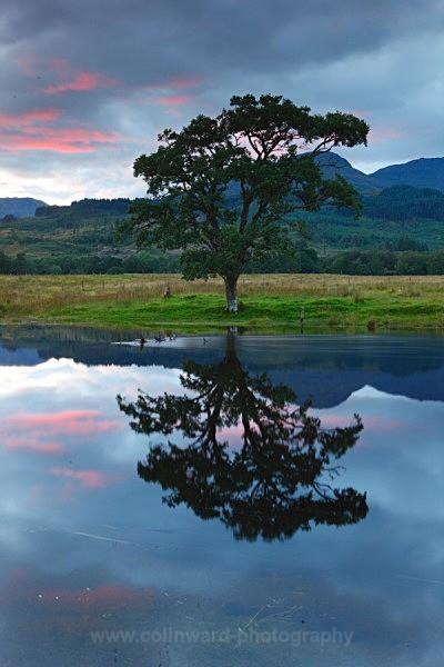 Loch Eil and a Alder tree at sunset     ref 1613 - West Highlands