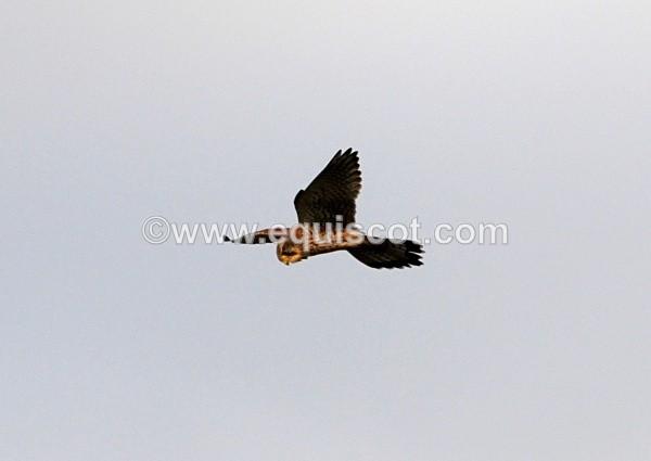- Wildlife & Landscape
