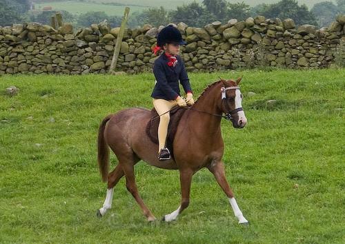 50 - Moniaive Horse Show 2008
