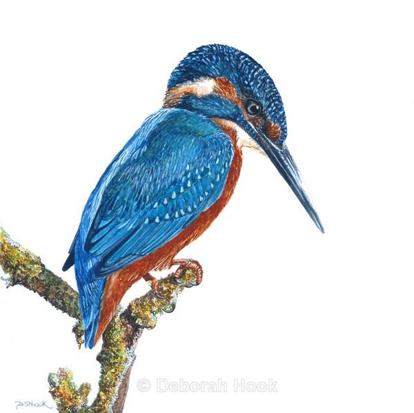 Biding time - Birds