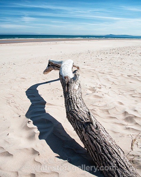 Driftwood on Lossiemouth Beach - Scottish Highlands
