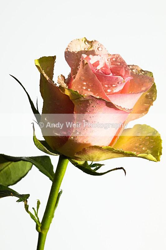20140202-3K8A8661 - Plants & Flowers