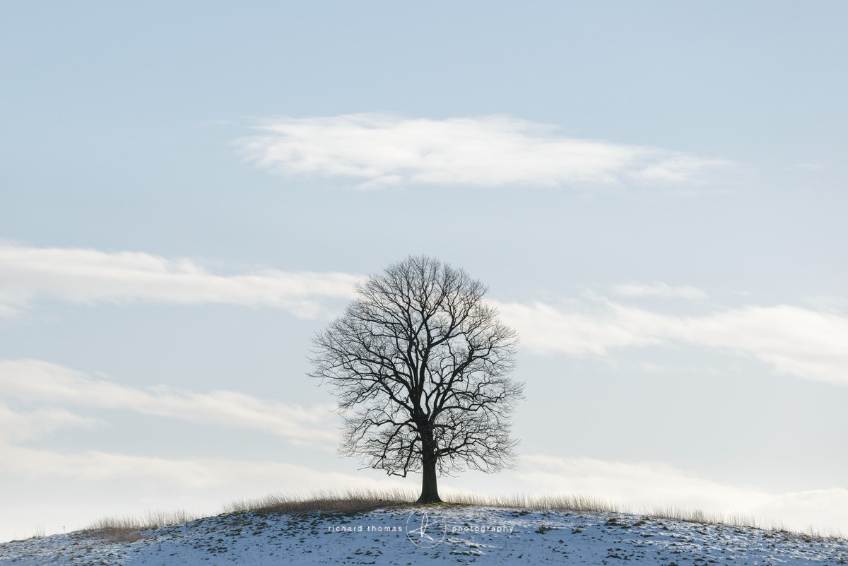 The Low tree - WINTER