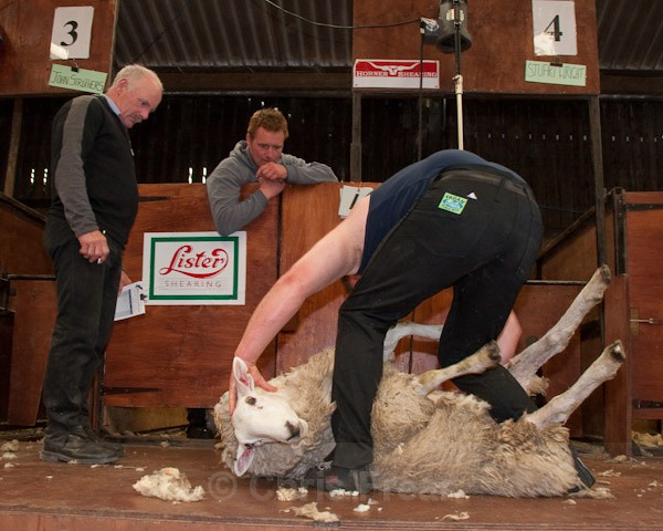 34 - Shearing Competition