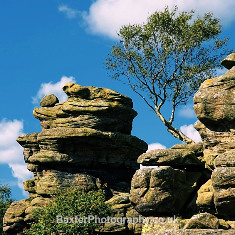 A Tree And A Hard Place (Square) - Brimham Rocks and  Bolton Abbey