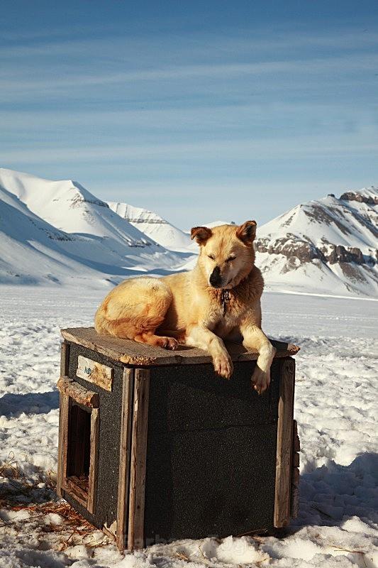 Husky 6823 - Winter in the daylight