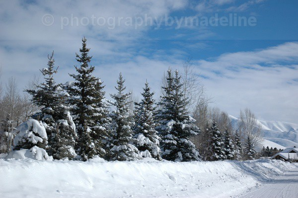 Sun Valley Idaho Going Home - Landscapes