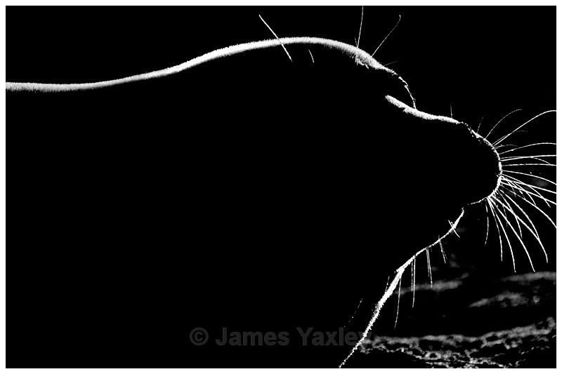 First Light - Nature in Black & White