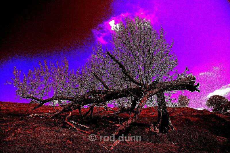 Reincarnation of The Trees - art images